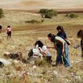 Al via oggi il campo di volontariato naturalistico nel Parco Nazionale dell'Alta Murgia