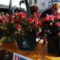 Festa della Mamma, in piazza l'Azalea della ricerca AIRC