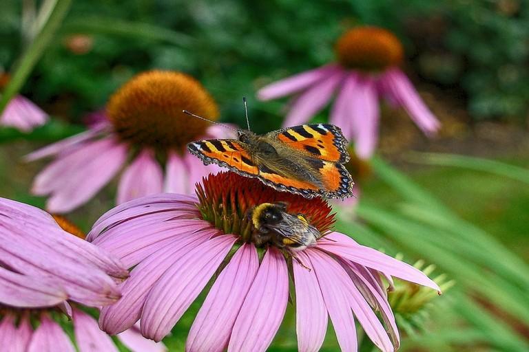 Api e farfalle