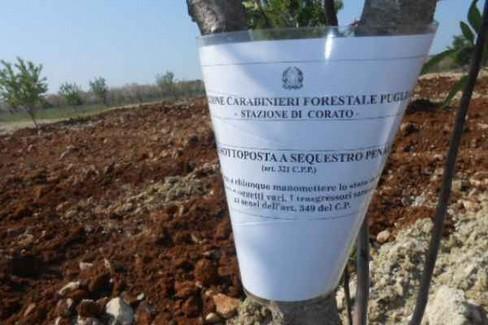 Il sequestro dei Carabinieri Forestali