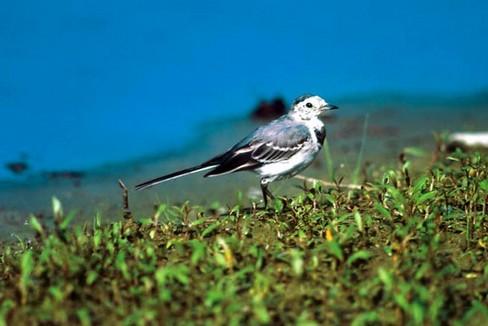 Fauna boschiva