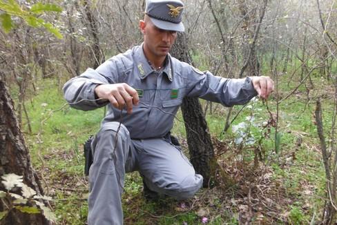Bracconieri - forestale