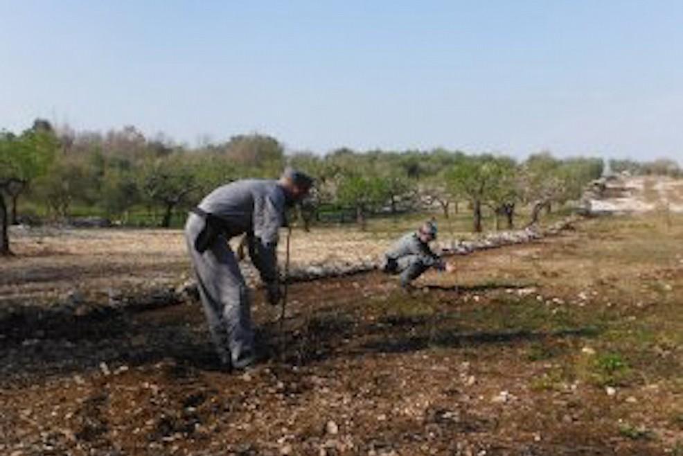 Abbatte 85 querce nel parco nazionale dell 39 alta murgia for Alberi simili alle querce