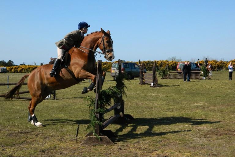 Salto ad ostacoli cavallo